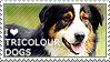 I love Tricolour Dogs by WishmasterAlchemist