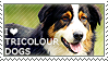 I love Tricolour Dogs by WishmasterAlchemist