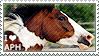I love American Paint Horses