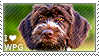 I love Wirehaired Pointing Griffons by WishmasterAlchemist