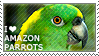 I love Amazon Parrots by WishmasterAlchemist
