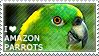 I love Amazon Parrots by WishmasterAlchemist