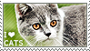 I love Cats by WishmasterAlchemist
