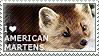 I love American Martens by WishmasterAlchemist