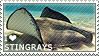 I love Stingrays by WishmasterAlchemist