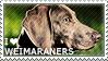 I love Weimaraners by WishmasterAlchemist