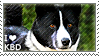 I love Karelian Bear Dogs by WishmasterAlchemist