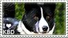 I love Karelian Bear Dogs by WishmasterAlchemist