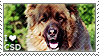 I love Caucasian Shepherd Dogs by WishmasterAlchemist