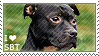 I love Staffordshire Bull Terriers