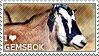 I love Gemsbok