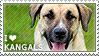 I love Kangal Dogs