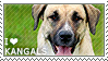 I love Kangal Dogs by WishmasterAlchemist