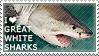 I love Great White Sharks