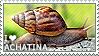 I love Achatina by WishmasterAlchemist