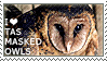I love Tasmanian Masked Owls