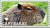 I love Capybaras by WishmasterAlchemist