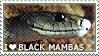 I love Black Mambas by WishmasterAlchemist
