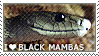 I love Black Mambas by WishmasterAlchemist