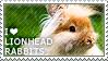 I love Lionhead Rabbits