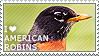 I love American Robins