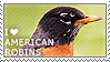I love American Robins by WishmasterAlchemist