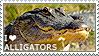 I love Alligators by WishmasterAlchemist