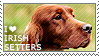 I love Irish Setters by WishmasterAlchemist