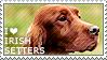 I love Irish Setters by WishmasterAlchemist