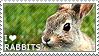 I love Rabbits by WishmasterAlchemist