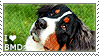 I love Bernese Mountain Dogs