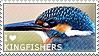 I love Kingfishers