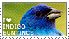 I love Indigo Buntings by WishmasterAlchemist
