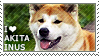I love Akita Inus