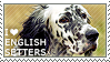 I love English Setters by WishmasterAlchemist