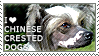 I love Chinese Crested Dogs by WishmasterAlchemist