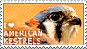 I love American Kestrels