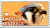 I love American Kestrels by WishmasterAlchemist