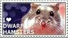I love Dwarf Hamsters by WishmasterAlchemist