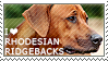I love Rhodesian Ridgebacks by WishmasterAlchemist