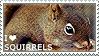 I love Squirrels by WishmasterAlchemist