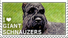 I love Giant Schnauzers by WishmasterAlchemist