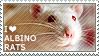 I love Albino Rats by WishmasterAlchemist