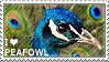 I love Peafowl by WishmasterAlchemist