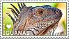 I love Iguanas by WishmasterAlchemist