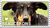 I love Beaucerons