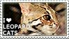 I love Leopard Cats by WishmasterAlchemist