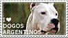 I love Dogos Argentinos