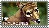 I love Thylacines