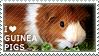 I love Guinea Pigs by WishmasterAlchemist